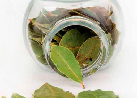 лавровый лист от гайморита