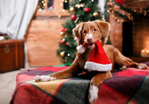 поздравления со годом собаки 2018